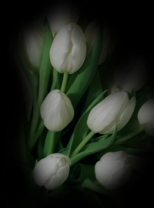 white_tulips.png